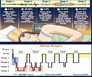 أطوار النوم بما فيه الطور الثالث والرابع الذي تحدث فيه حالة الماشي نائماً