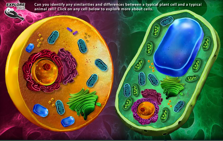 Image Gallery life science cells