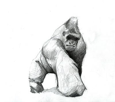 Aaron's Blah Blah Blog: A.O.T.D. (Animal of the Day) Gorilla - photo#39