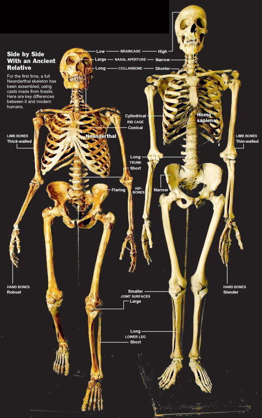 What It Means To Be A Human Homo Neanderthalensis