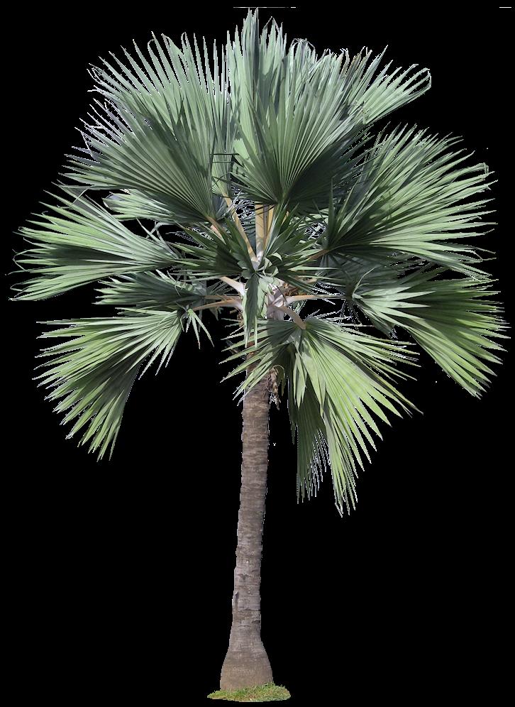 trees palm blue - photo #30