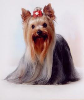 Peluqueria Canina Y Cuidados De La Mascota Yorkshire