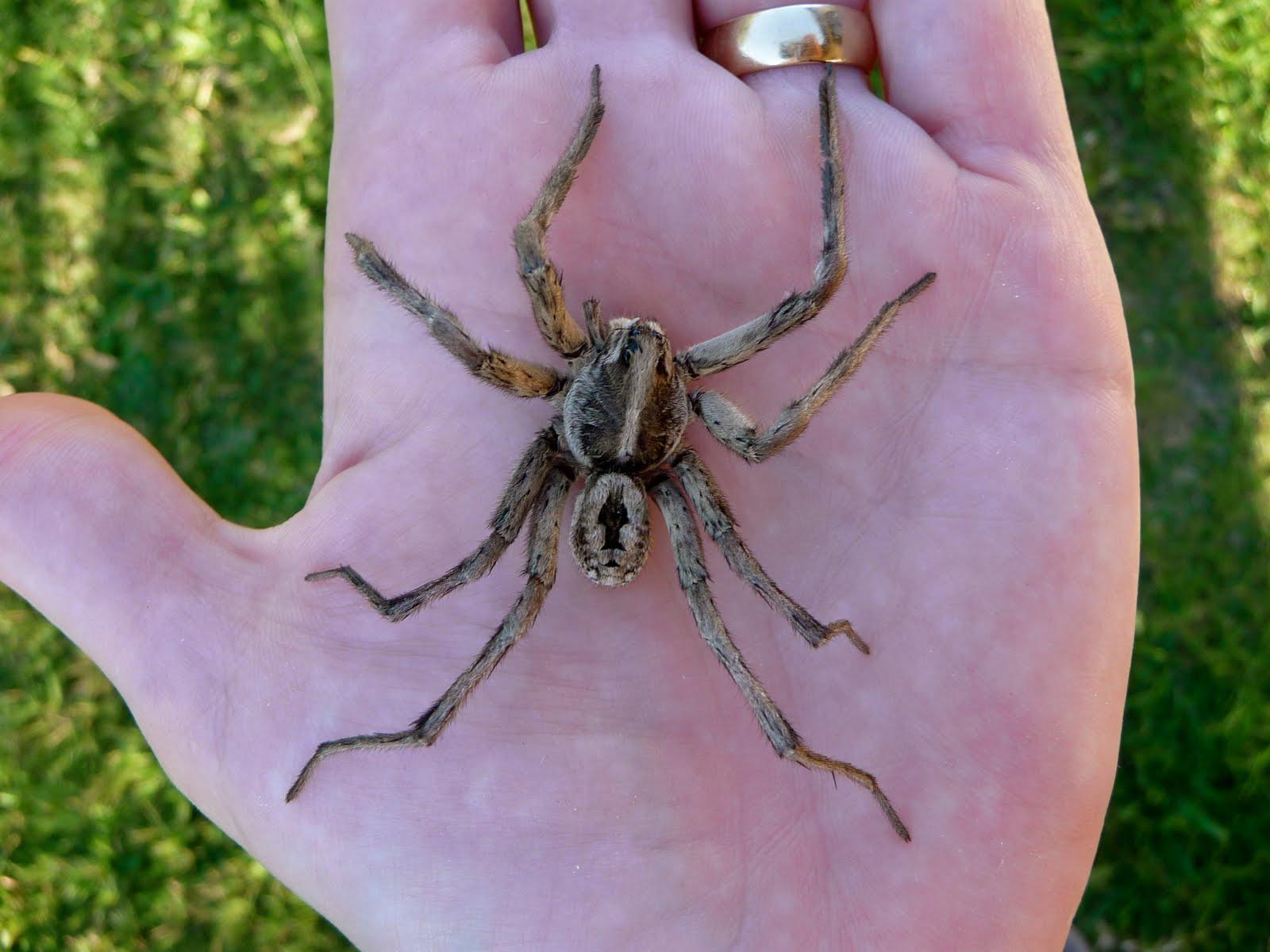 My Little Bit of Heaven: One Big Honkin' Spider
