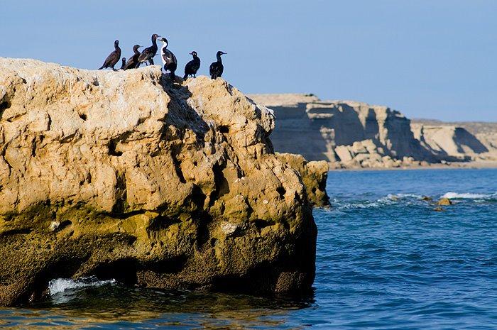 cormoranes en la geografia de Península Valdés
