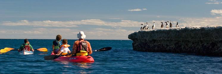 Kayak en Puerto Pirámides, único centro urbano de Península Valdés en la Patagonia Argentina