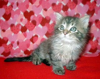 The Caperncorn Project Kitty Valentine S