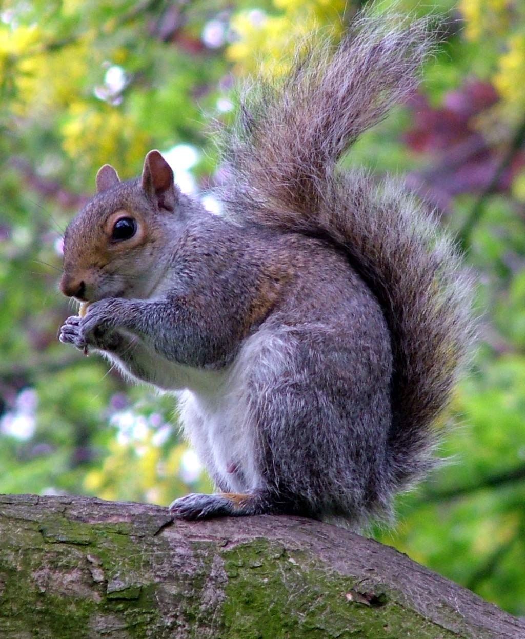 1).jpg. http://duncraft.atom5.com/files/squirrel