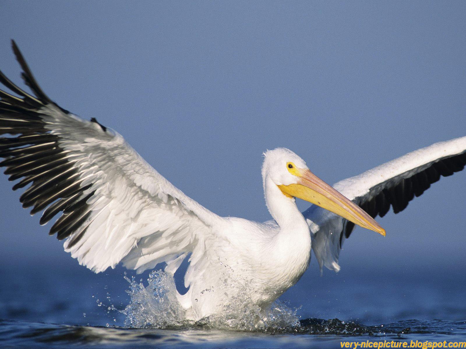 cool birds wallpaper - photo #36