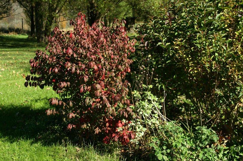 Colors Of The Garden: November 2010