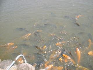 pescuit in Shioda