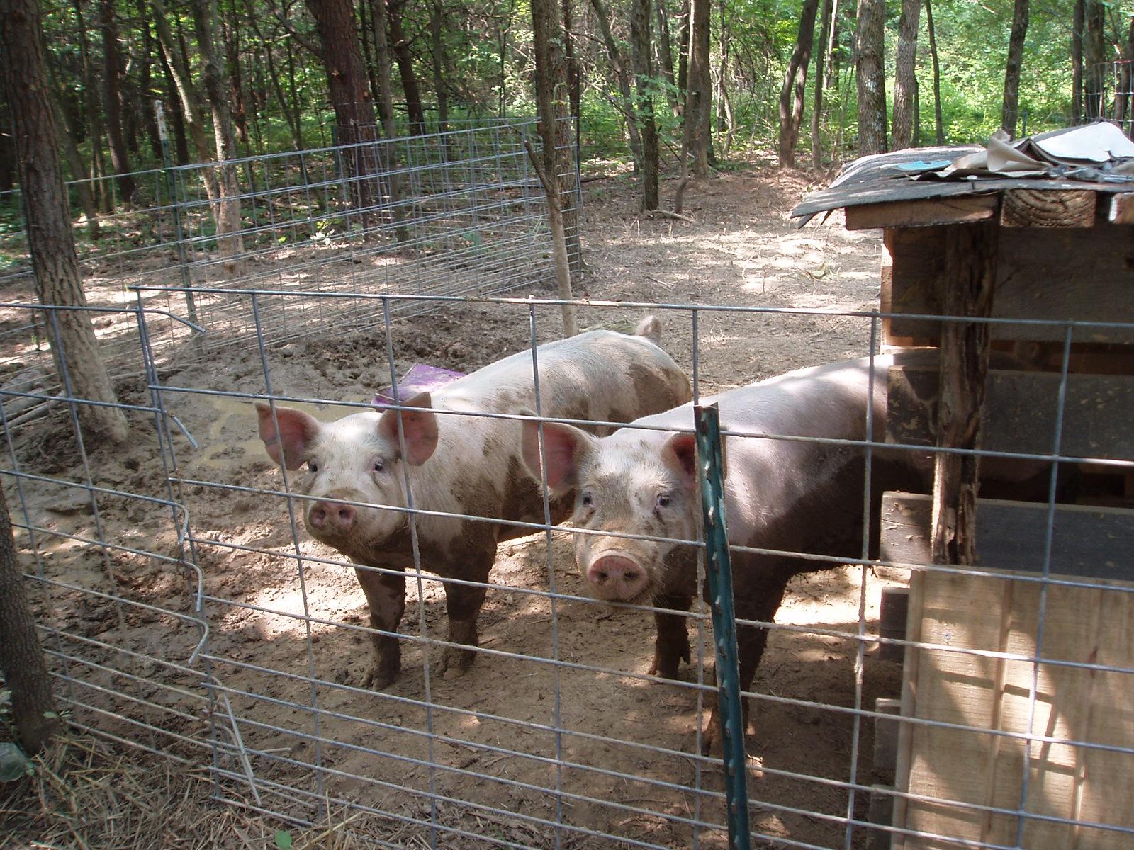 Ohiofarmgirl S Adventures In The Good Land How To Grow