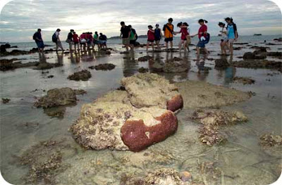 Visitors exploring the reefs of Pulau Semakau with the volunteer guides of the Raffles Museum of Biodiversity Research