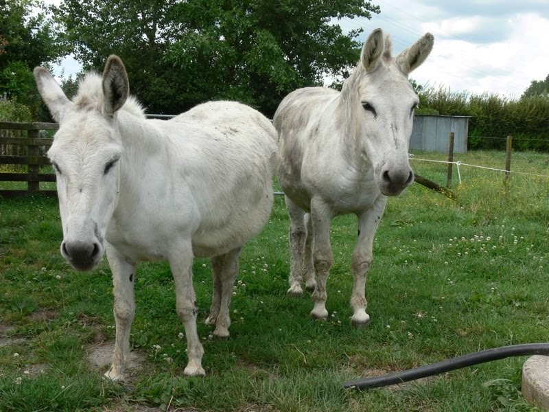 Woolshed 1: Animal behaviour and welfare: Donkey Part 2