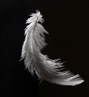 Resultado de imagem para pena de anjo