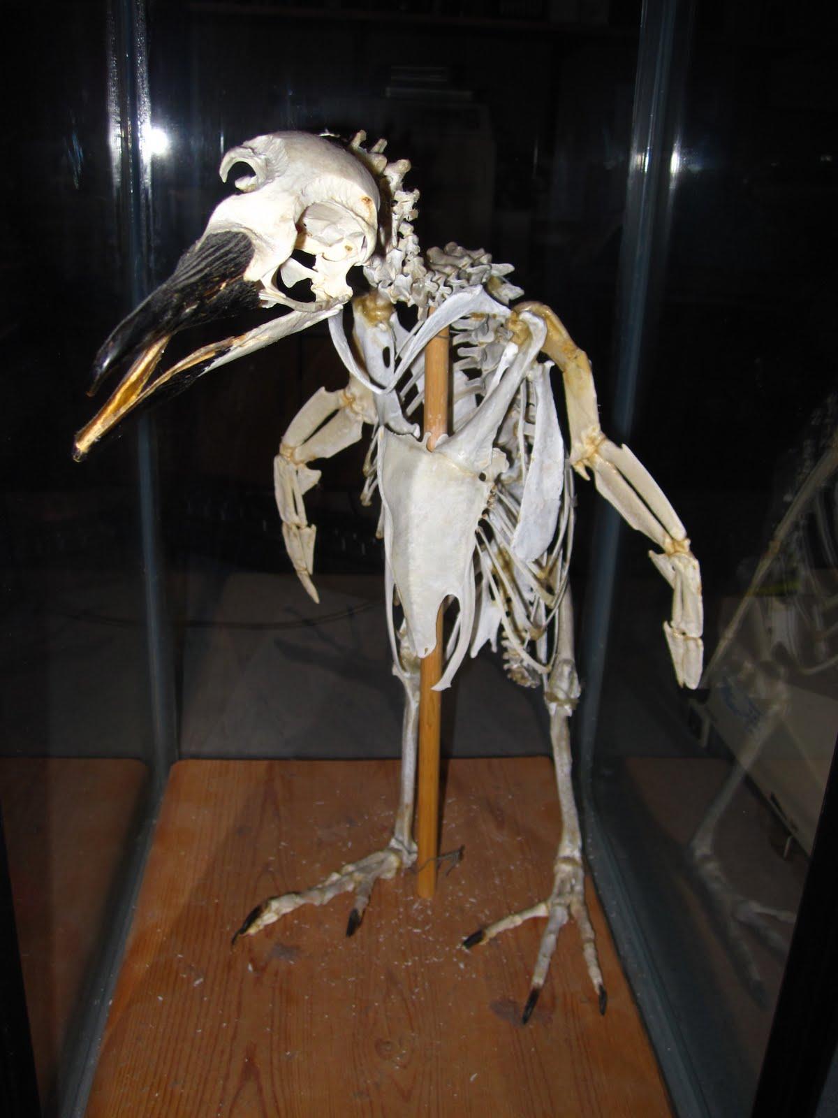Faq do penguins have knees