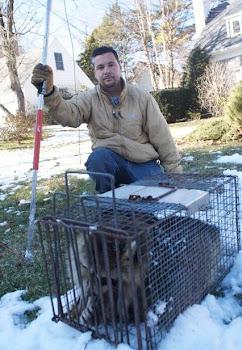 Mondo S Wildlife Nuisance Removal Service Llc Skunks