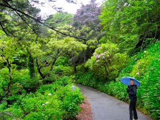 Pat Dunlap Botanic Gardens Wellington New Zealand