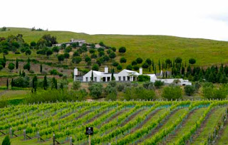 Hawkes Bay Vineyard New Zealand