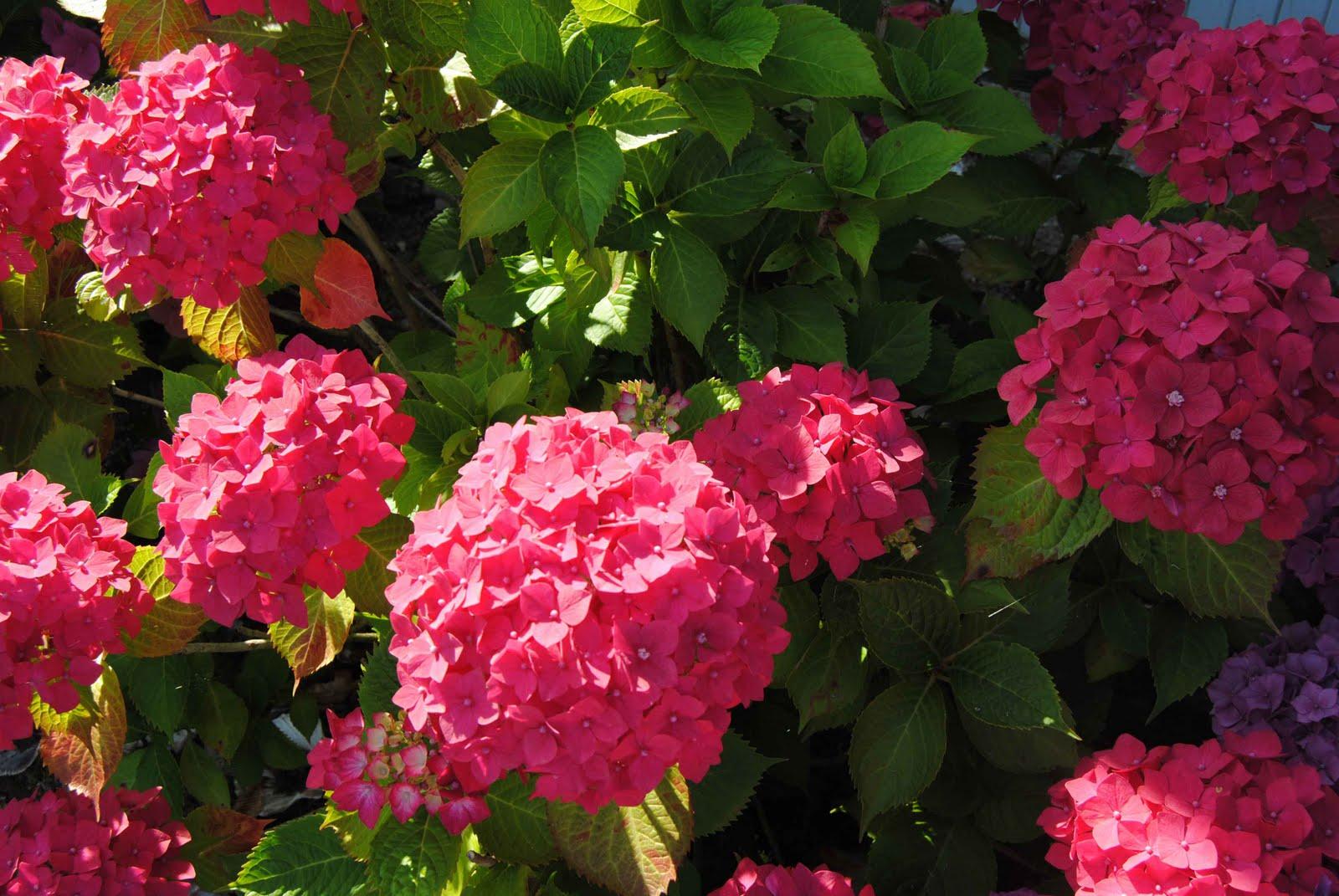 Blumen August