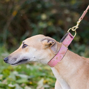 Martingale Collars - What are they & why use them?