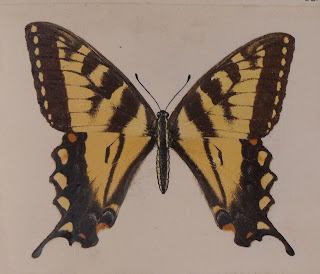 An image of a yellow and black butterfly.