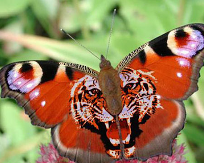 الفراشات f6aeea4cd5.png