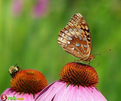 الفراشات %D8%A1.jpg