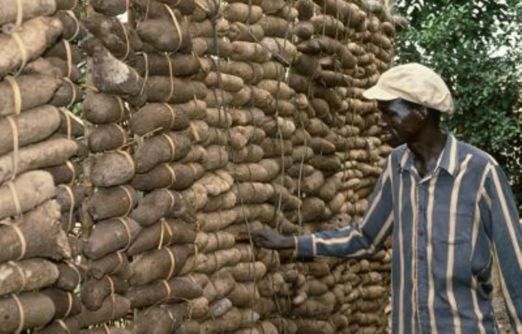 Nigerian Yam: IITA News And Updates: EU FUNDING FOR AFRICAN YAM RESEARCH