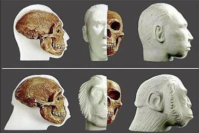 Os modelos artísticos presentes na imagem acima representam duas concepções realizadas a partir do mesmo crânio de Neandertal, descoberto em La Chapelle-aux-Saints, em França. A 1ª representação é uma concepção mais moderna do homem de Neandertal, depois de se descobrir que ele foi mais humano do que ao início se pensava. A 2ª representação é uma concepção que remonta a finais do século XIX, quando se afirmava que o homem de Neandertal era um ancestral primitivo do ser humano. Observe como o mesmo crânio deu origem a representações tão díspares.
