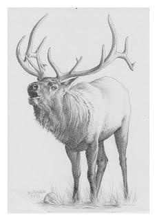 Kenny Oliver's Art: Elk Pencil Drawing