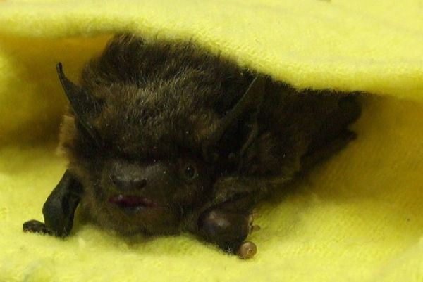 Cool Animals Pictures Blankets And Baby Bats