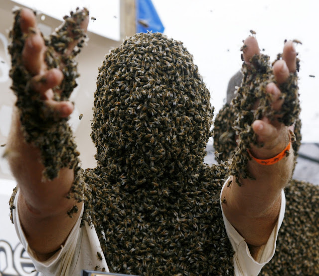 body completely covered by bees