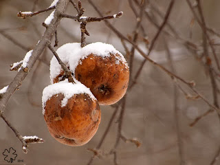 Seasonal Affective Disorder image