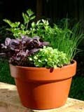 Herbs Container image