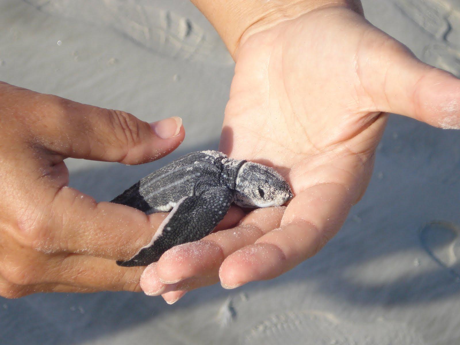 Cute Baby Turtles – WeNeedFun |Baby Sea Turtles