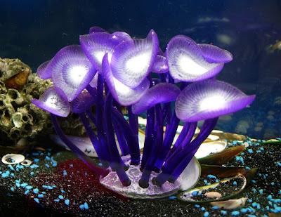 Azoo Palythoa Sp. Neon Glow Coral: Azoo Neon Palythoa Sp ...