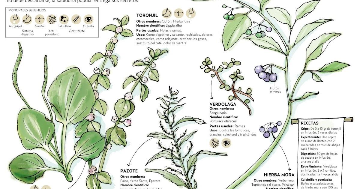 Lora Verde: Plantas Medicinales