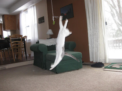 my cat jumping for a piece of string, energy, kitten