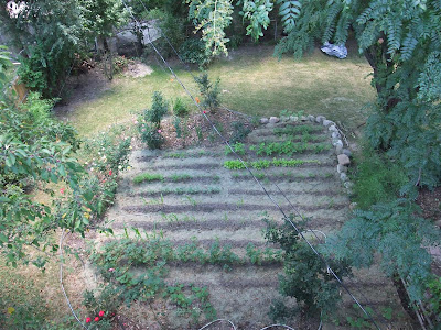 garden view from above, michigan soil, clay