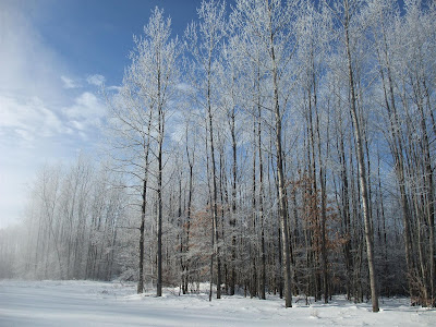 frozen forest, icicles on trees, snow covered