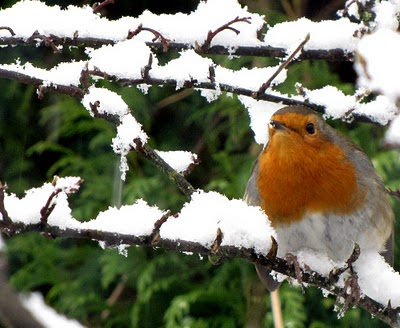 The Fells Robin in Bearsden Glasgow - Click to enlarge