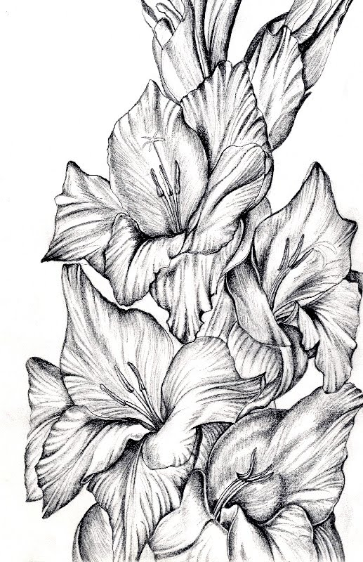 Hannah Siobhan Stewart Organic Line Drawings Pen Amp Ink Pencil
