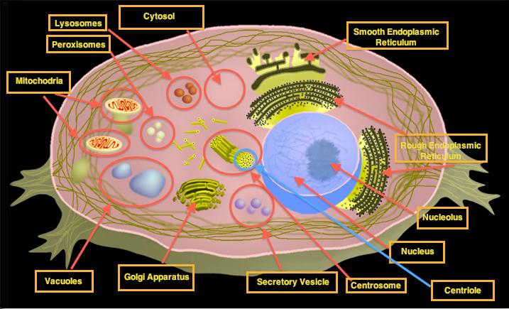 S102 U0026 39 S Biology Blog   April 2010