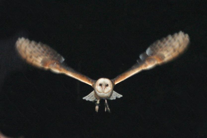 World Bird Sanctuary: Owl Prowls