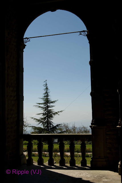 Posted by Ripple(VJ): A pine tree stands out when viewed through an arch in the Viceregal house, Shimla