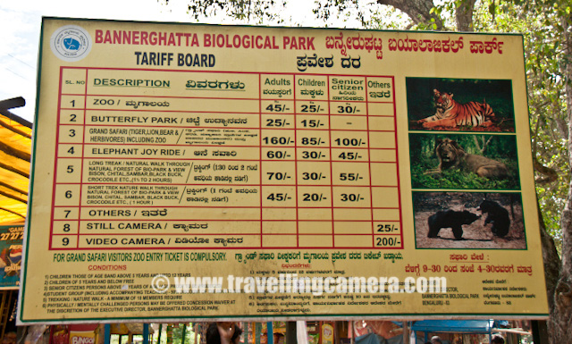 PHOTO JOURNEY to Baneghatta National Park in Banglore - Tigers, Lions : Posted by VJ SHARMA on www.travellingcamera.com : Banerghatta National Park is one of the main attraction in Banglore city and it was our first choice in the list of all the places we wanted to visit in Banglore... After reaching the place and having one round of wildlife sactuary, it was was marked as a successful visit and worth spending half day including Butterfly house and Zoo... Check some of the photographs with some details....It was an amazing experience to see lot of white tiger raoming around us... Actually Banerghatta is not like Jim Corbett, Ranthambore or many of other national parks where wild animals are allowed to roam in any part of the sacnyuary. Banerghatta has some dedicated sections for each type of wild animal and many times these animals can be caught around the roads because of good network of roads inside...After 15 minutes drive from office we reached Banerghatta National Park and here is open parking of Banerghtta.. Its just behind the Bus Stand for this place... After parking the car here we ealized that its a popular place among young couples of Banglore :) just like Lodhi Garden in Delhi... Never mind, we can understand the fact about scarcity of space in these bug cities...After parking the car we took the short cut through bus station of Banerghatta National Park... Here is a photograph of Banerghatta National Park Bus-Station.... Two kinds of buses connect this place from city... AC Buses and the ordinary ones... AC buses have also very nominal tickets and people prefer to have them here and there is good frequesncy of AC buses to Banerghatta National Park...There  is a small market just outside Banerghatta National Park and Zoo... After looking at this market its looks like some fair where everyone is very excited and want to have some adventure in life... Children playing around, adults having some fun in the gardens and elders buying some stuff for home or something to eat... Here is a photograph of Banglore wheel :)Next step was to find out ticket counter and here is one hoarding showing ticket rates for various things... There is a Zoo, A butterfly park, Wildlife safari and Elephant Ride... Various combinations have different tickets... For more details check out the pohotograph above...After having two tickets for Wildlife safari and Banerghatta Zoo, we went to the main gain for taking the bus for wildlife ride into the Banerghatta National Park... They have some closed buses which take all the tourists to Banerghatta Nationa Park and stop wherever they see something... Drivers and a guide, who are main decision makers for stopping the bus and for how much time, were very rude initially but after some chit-chat they started stopping bus as per our choice... n of-course, this service wa not free...Here is Karnataka Tourism bus which tok us inside the Banerghatta National Park in Banglore.... We left it near Butterfly Park which is very near to Exit of wildlife boundaries... We were sitting on the front seat and here is a photograph of a dry area inside Banerghatta National Park on driver-side.. I have been to ariska, Jim Corbett and Ranthambore many times but never saw tiger there.. Banerghatta National Park is the firstwildlife sanctuary where I saw tigers first time... It was not the only tiger we saw.. There were lot many ...Lion pugs playing with each other... There was a beautiful section fo lions and they were having fun on the side of a water stream inside Banerghatta National Park... Children in our bus were very happy at this place and they didn't want to move ahead from that place... Driver took them at same place while returning back...Spotted Dear in Banerghatta National Park, Banglore...India has over 550+ animal sanctuaries which are referred to as Wildlife Sanctuaries... Among these 28 are Tiger Reserves which are governed by Project Tiger and are of special significance in the conservation of the tigers in india... These day many organizations are doing various events to make people aware of the fact that total count of tigers in india is going down and we should be sensitive about it... Some wildlife sanctuaries are specifically named Bird Sanctuary, eg. Keoladeo National Park before attained National Park status... Many National Parks were initially Wildlife Sanctuaries...Fighting bears inside Banerghatta National Park, Banglore, Karnataka, INDIA