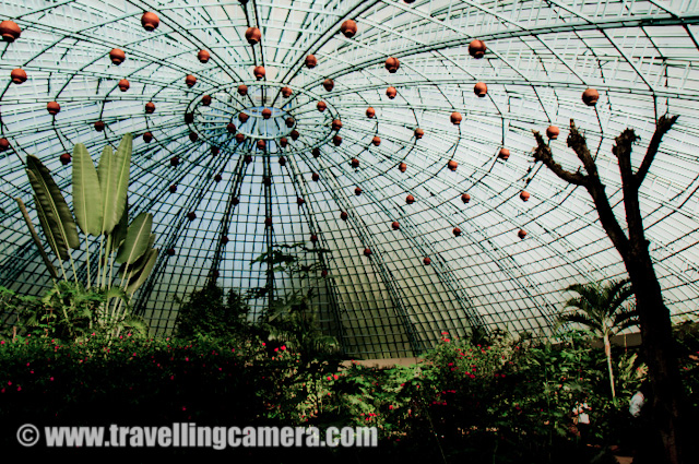 Butterfly House inside Banerghatta National Park in Banglore : Posted by VJ SHARMA on www.travellingcamera.com : There is an interesting place inside Banerghatta National Park which attract most of the visitors, which is know as Butterfly park... Its a spherical house which is made of circular iron rods forming a net so that sunlight can come inside this... There is a wonderful park inside this house where lot of butterflies can be seen around beautiful & colorful flowers... Although its hard to locate these butterflies but still its a wonderful place to hang out after having a tour of Widllife inside Banerghatta National Park.. Here are few photographs of Butterfly Park inside Banerghatta, Check Out !!!There are very beautiful flowers inside this butterfly park.. Here is one of the flower I liked and these were available in various colors... but whites were standing out of the hole group.... This is Butterfly house which is made of circular iron bars... There were lot of plants, flowers, butterflies and water bodies inside this house... One needs to put lot of efforts to locate the colorful butterflies because of lot of plants and flowers around... They have installed some hoarding at various places to describe which particular Butterfly can be located here... All that is by design because specific plants are there which are source of feed for a particular breed of butterflies... ntry gate for Butterfly Park inside Banerghatta national Park...There are some artificial waterfall designed inside the Butterfly park of Banerghatta national Park...A little baby trying to catch butterflies inside Banerghatta Butterfly Park... Initially she was very frustrated... When she realized that her Mom and Dad are also unable to catch them, she was relaxed :) .... Next target is flowers... Butterfly Park is a very clean region of baenrghatta national Park... Here is one lady cutting the grass on the paths of Butterfly park...Here is the building of Butterfly Museum... This museum showcases various breeds of Butterflies and their life-cycle in details... How the production of Butterflies start and how much time each stage takes etc.... Nicely presented photographs, Videos and some write-ups...Mr. Rohin Duggal !!! Who took me to all these places in Banglore.. Thanks to Rohin for making the Banglore trip memorable....Again a photograph of Butterfly house and a family having a photograph there....