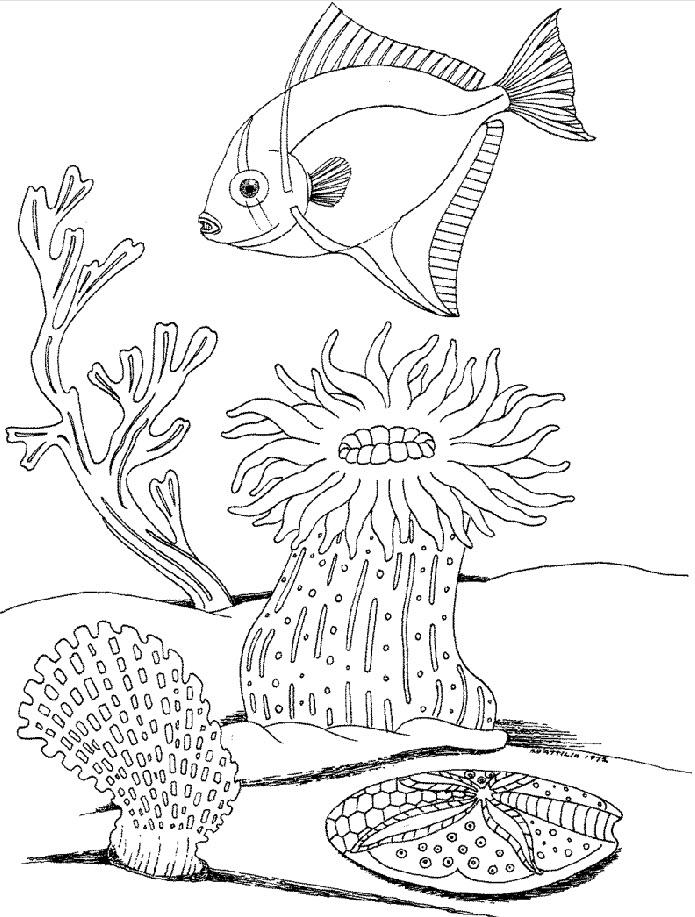 развитие ребенка раскраски подводный мир