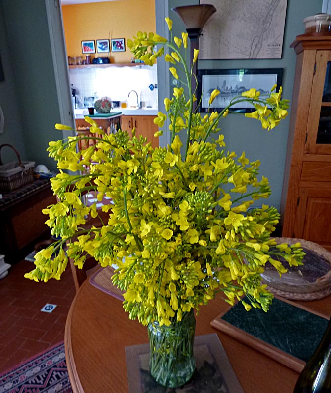 Living the life in saint aignan yellow flowers name that plant or canola if you are from canada colza in france or rape photo of flower aka oilseed rape wiki article but its none of those mightylinksfo