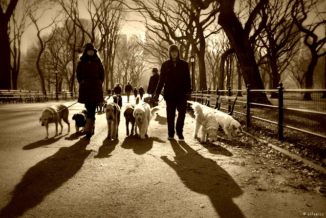 Dog sitter a Central park-New York